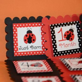 First Year Photo Clips, First Year Banner, Black and Red Dots, Lady Bug Theme
